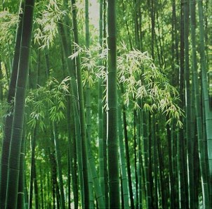 Forest of renewable bamboo