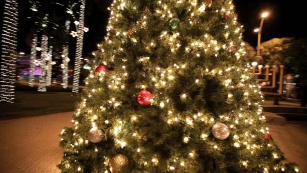 christmas lights miami # 54