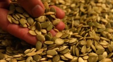 「pumpkin seeds hd」的圖片搜尋結果