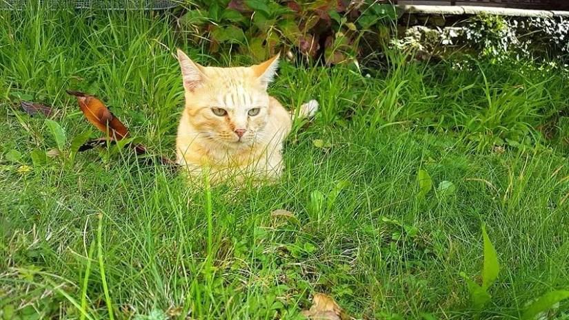 Download 66+  Gambar Kucing Sedih Lucu Imut Gratis