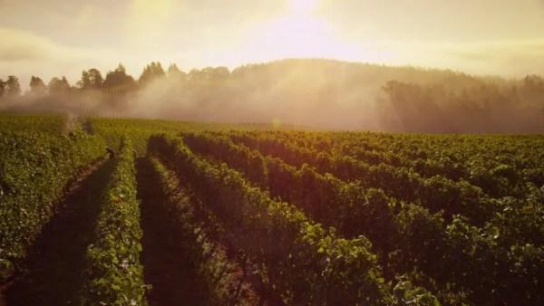 Stock Video Clip of Beautiful vineyard at sunrise, time ...