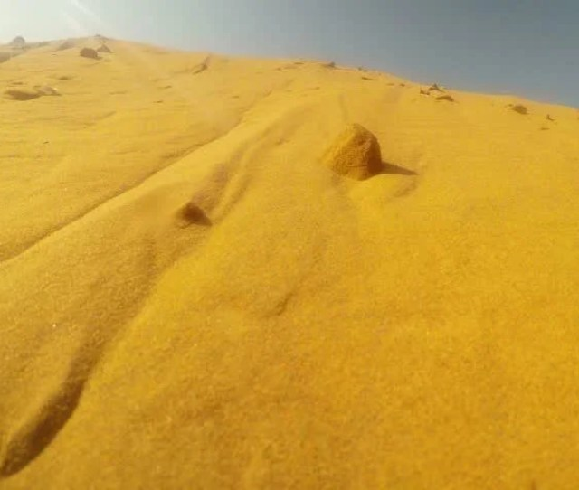 Pov Some Animal Marks Territory In Sand Dunes Desert Thar Close Up Rajasthan