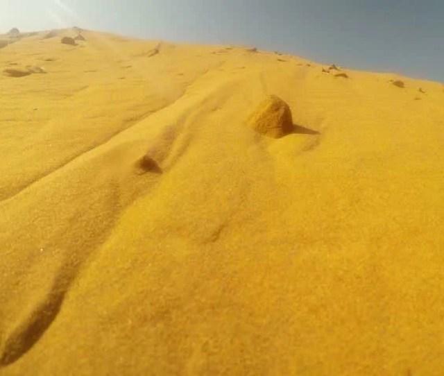 Pov Some Animal Marks Territory In Sand Dunes Desert Thar Close Up Rajasthan