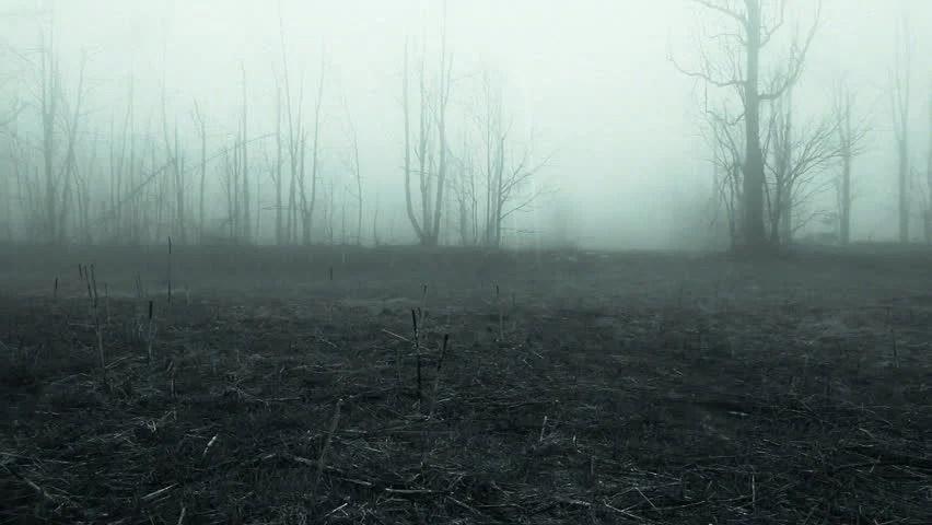 AERIAL Country Road Leading Through Dark Creepy Fields