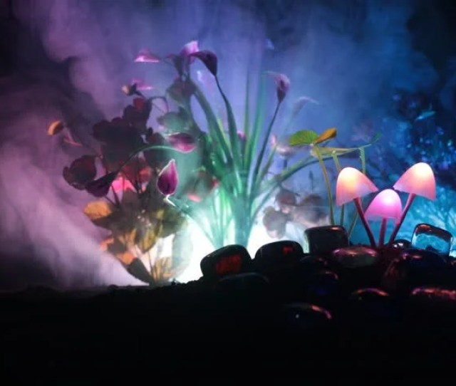 Three Fantasy Glowing Mushrooms In Mystery Dark Forest Close Up Beautiful Macro Shot Of