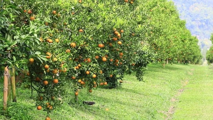 Image result for orange farm