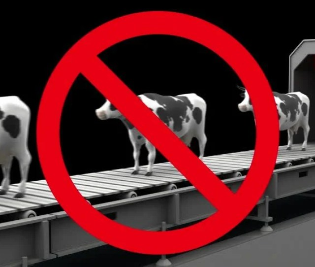 Cows In Prohibition Sign On The Conveyor Belt 3d Animation Seamless Loop