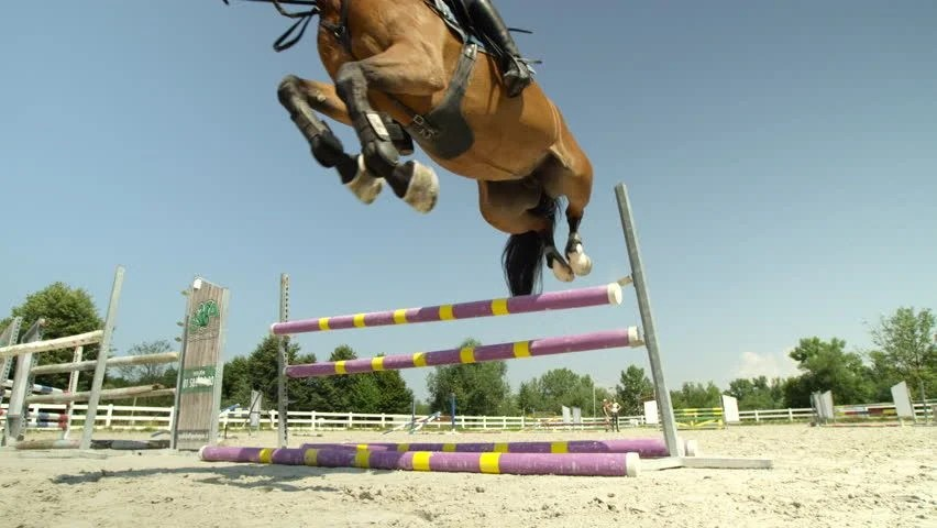 Showjumping Definition Meaning