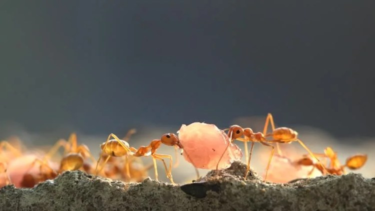 Image result for ant carrying food