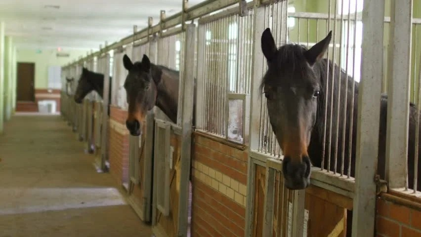 Horses In Stable Interior Stock Footage Video 100