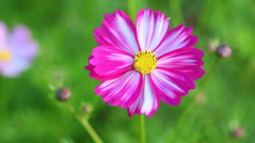 beautiful single flower images hd gendiswallpapercom