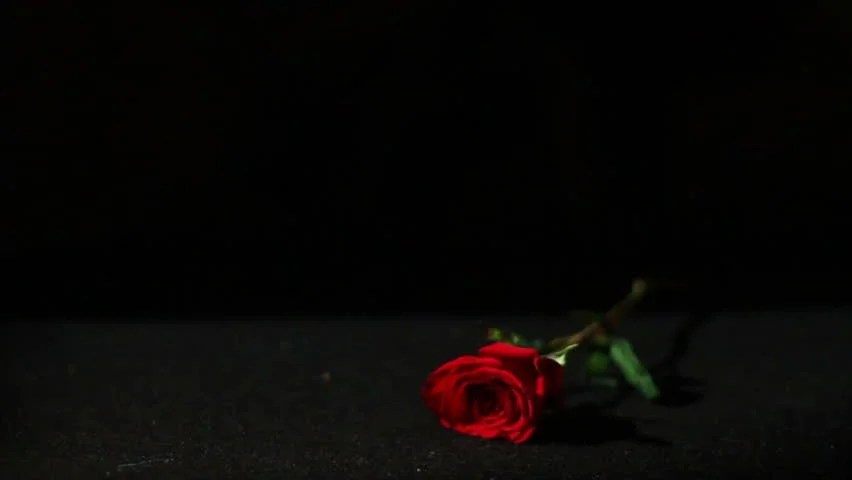 Red Rose And Candle On Black Background Stock Footage