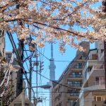 やっと見つけた!スカイツリーと桜のコラボスポット