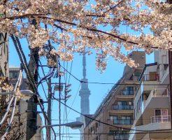 スカイツリーと桜のコラボスポット