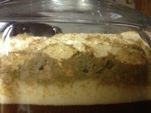 brown ale: T=9.5; a closer side-shot
