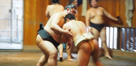 體驗⎮東京相撲部屋 近距離看力士的稽古練習