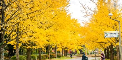 搭地鐵就能捕捉北海道童話般美景!札幌市內秋季景點推薦