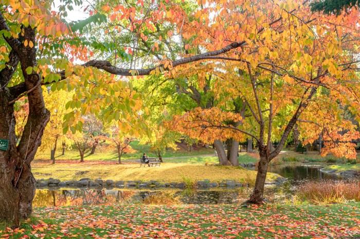 北海道札幌景點 中島公園