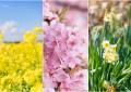 選個晴朗的日子就出發吧!千葉南部早春賞花景點