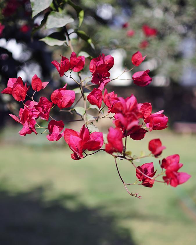 Vero Moda Marquee | Akanksha Redhu | flowers