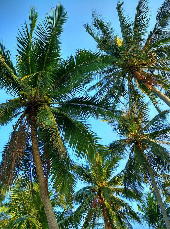 Koh Samui | Akanksha Redhu | palm sky