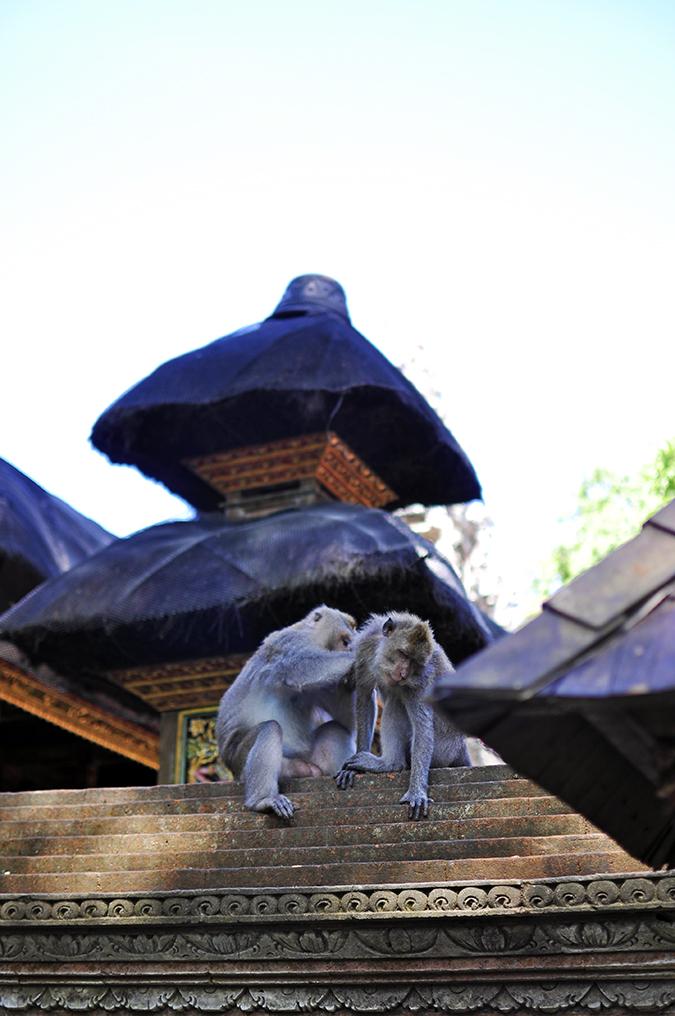 Sacred Monkey Forest Sanctuary - Ubud | Akanksha Redhu | monkey picking lice