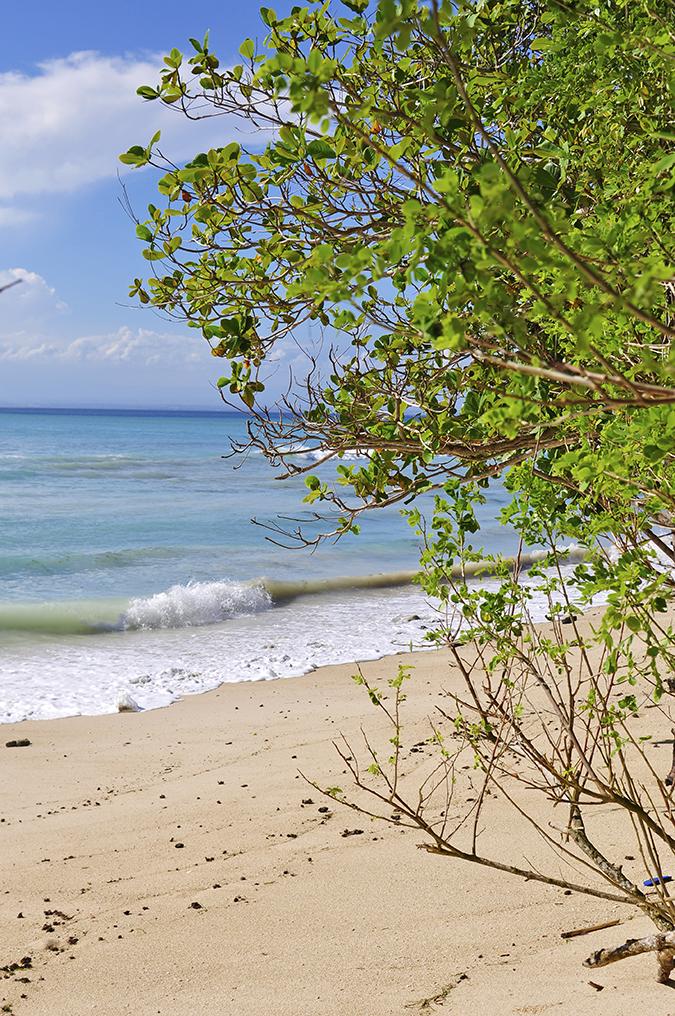 Padang Padang Beach   Bali   Akanksha Redhu   beach long tree