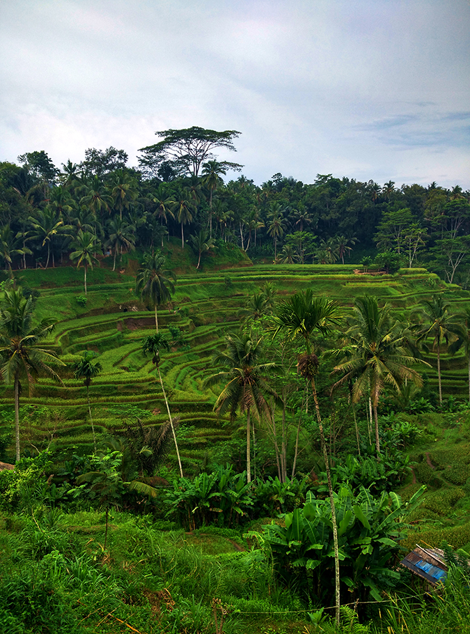 Tegalalang Rice Terraces - Ubud | Bali | Akanksha Redhu | phone terrace 2