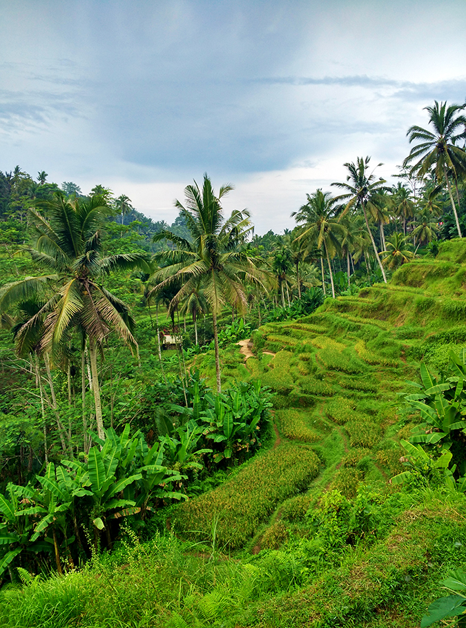 Tegalalang Rice Terraces - Ubud | Bali | Akanksha Redhu | phone terrace 1