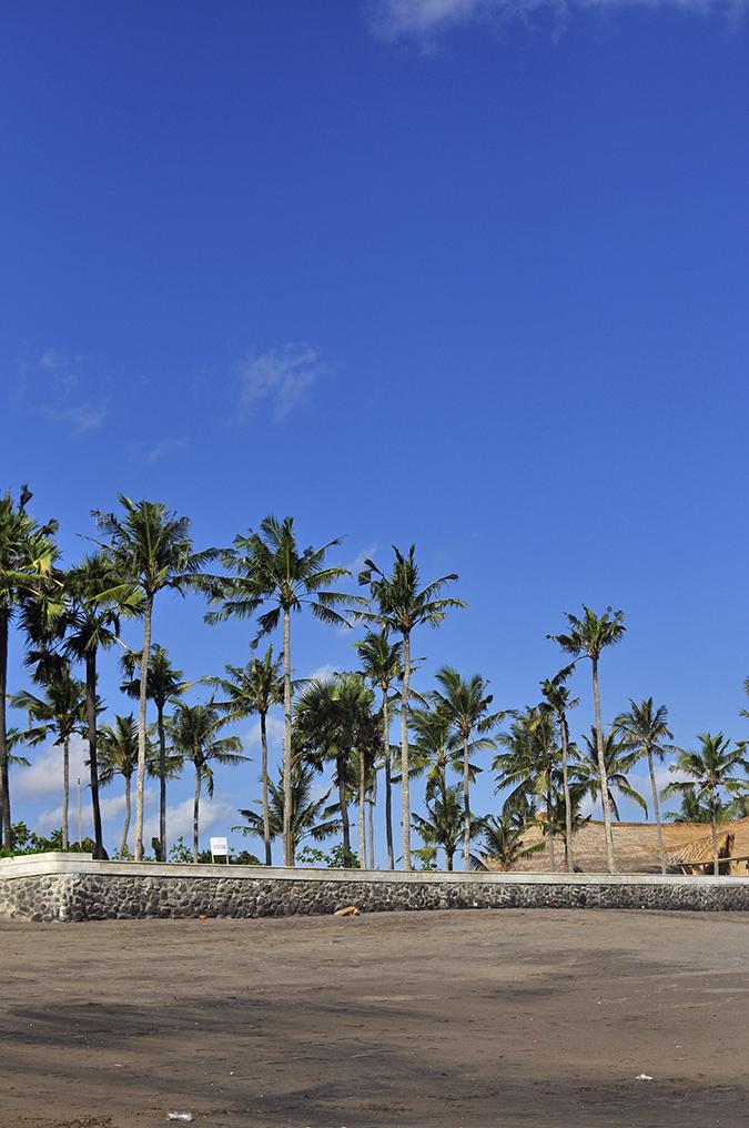 Berawa Beach | Bali | Akanksha Redhu | trees sky