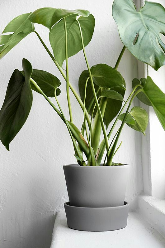 Home Inspo | Akanksha Redhu | grey plant pot