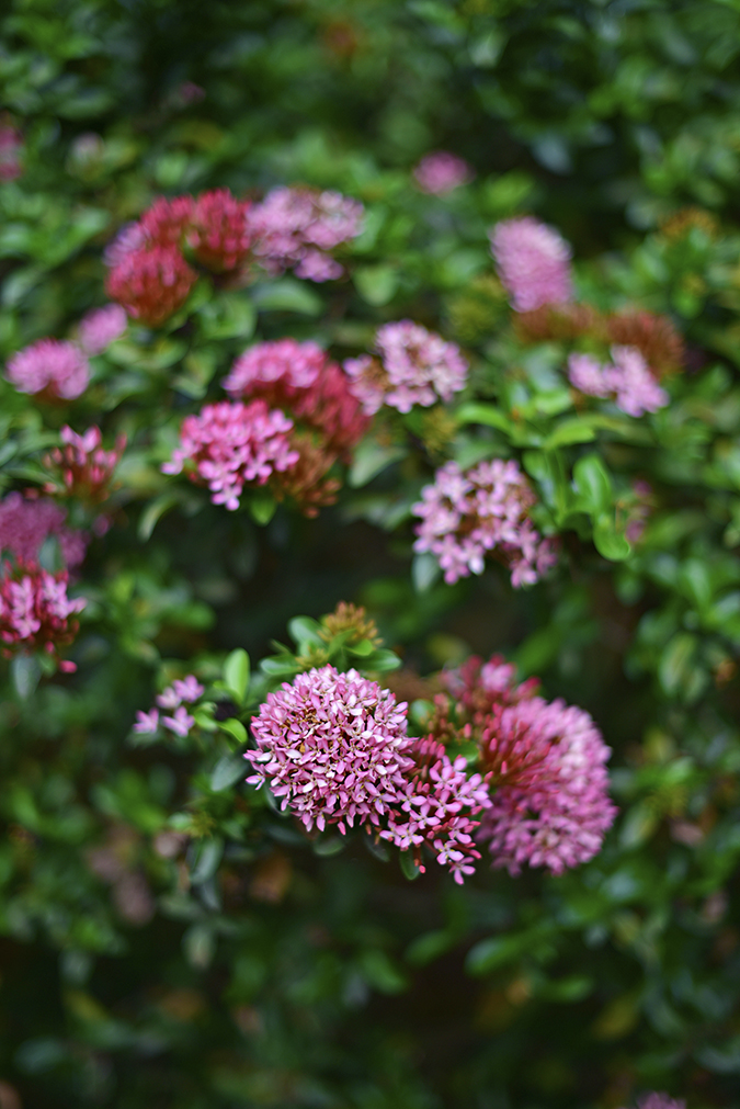 Kairali Ayurvedic Healing Village | Akanksha Redhu | flowers