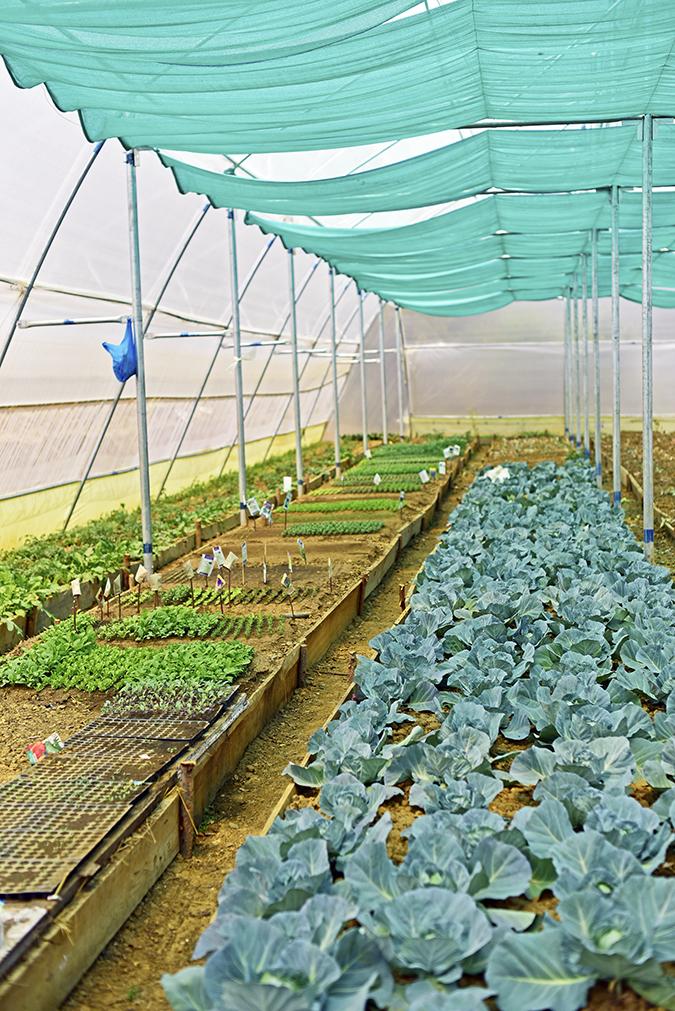 DYO The Organic Village Resort   Akanksha Redhu   kitchen garden