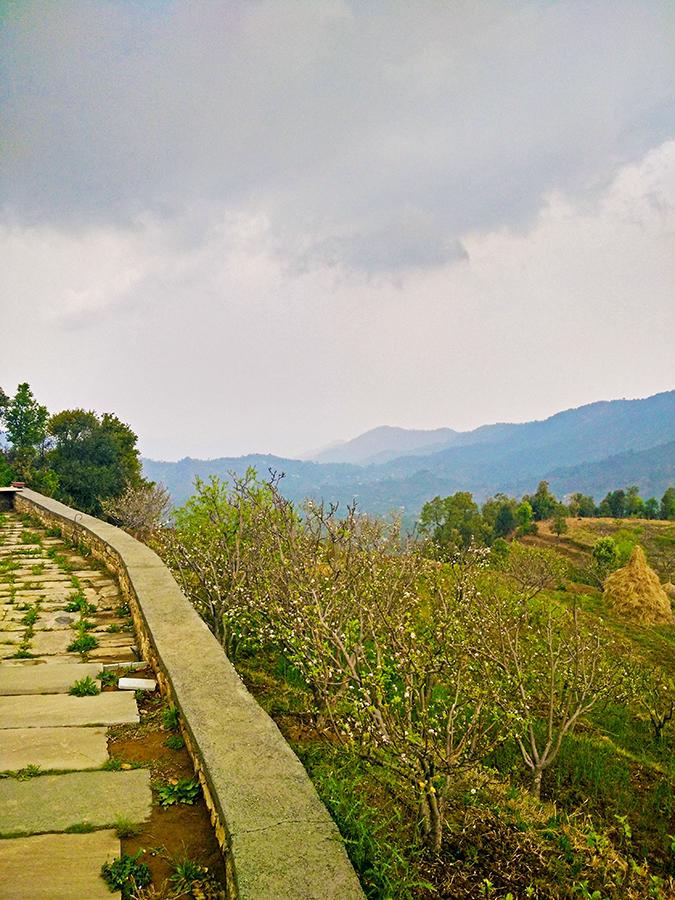 DYO The Organic Village Resort   Akanksha Redhu   mountains from garden