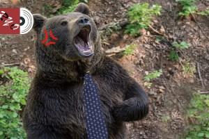 威嚇する熊