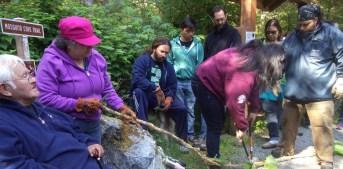 Sitka Elders and Institute teachers collecting Devils Club, Summer 2015