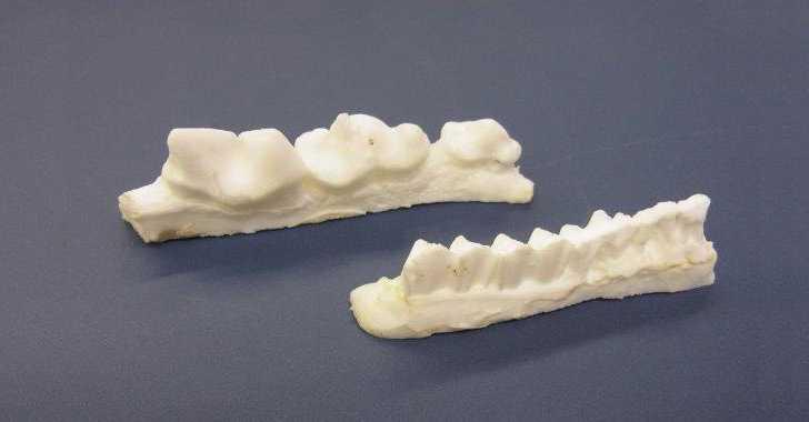 王子動物園歯型