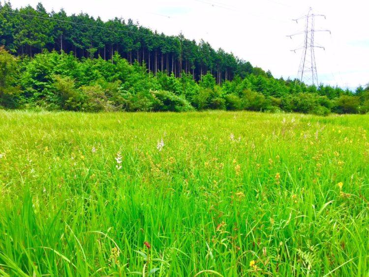 小田貫湿原3