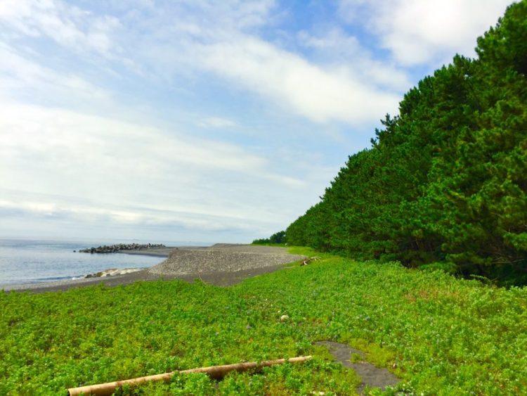 松林と海。