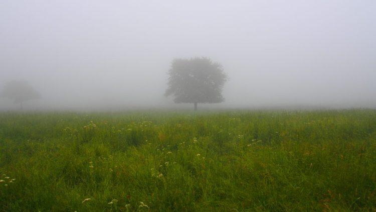 霧の中のヤマナシ。