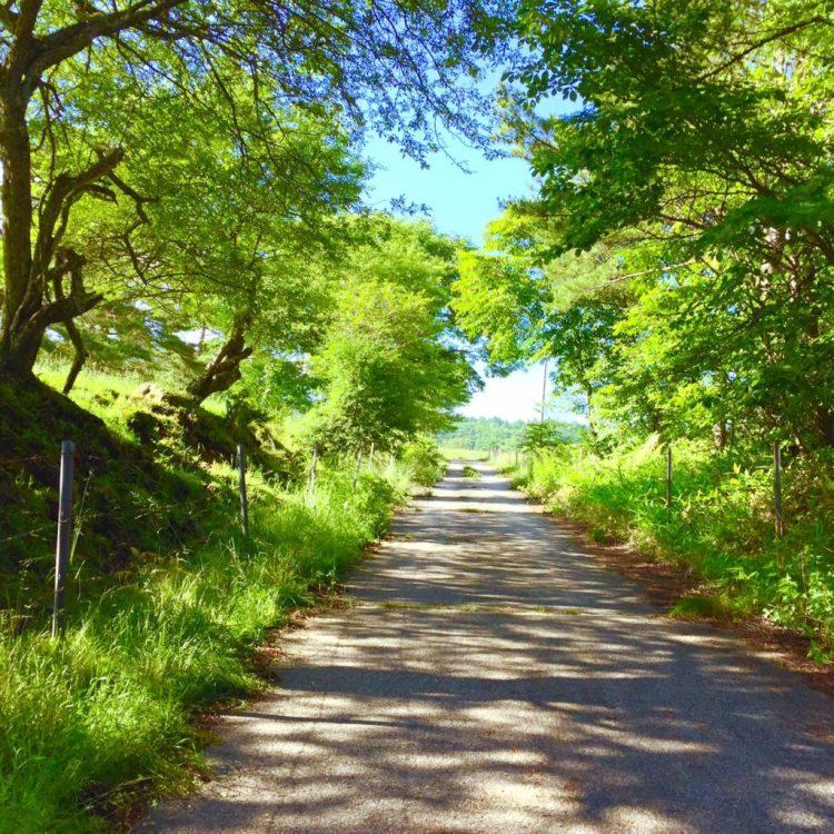 牧場の道。