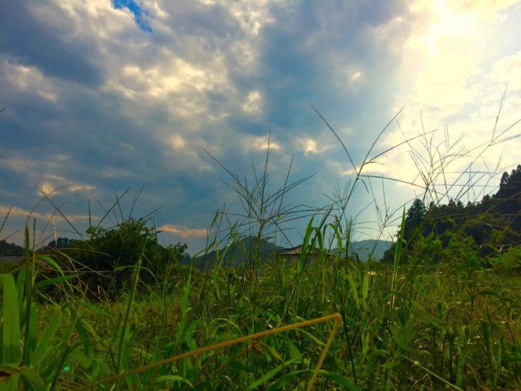 自然農法の畑。