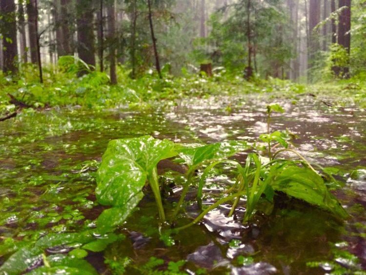 台風の日の森の姿。