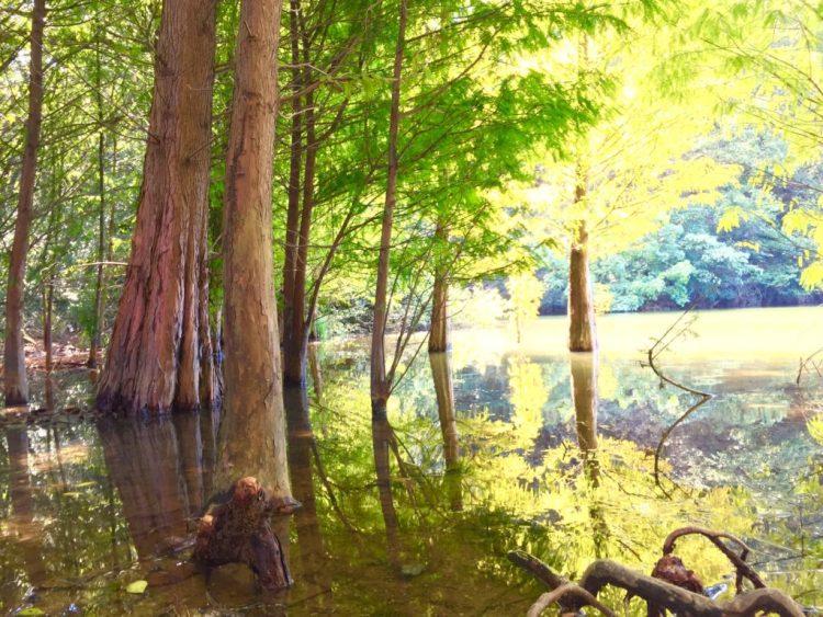 ラクウショウの森3