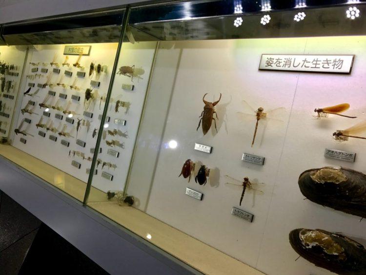 昆虫の種類も。