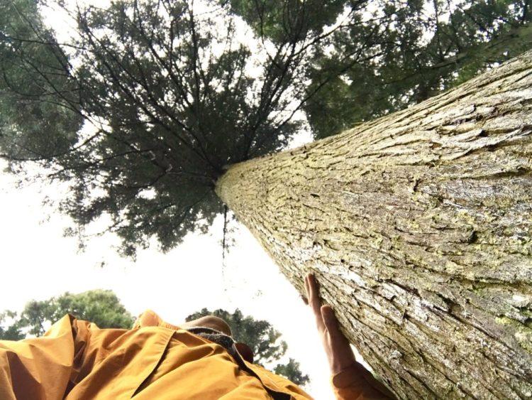 大きな木。