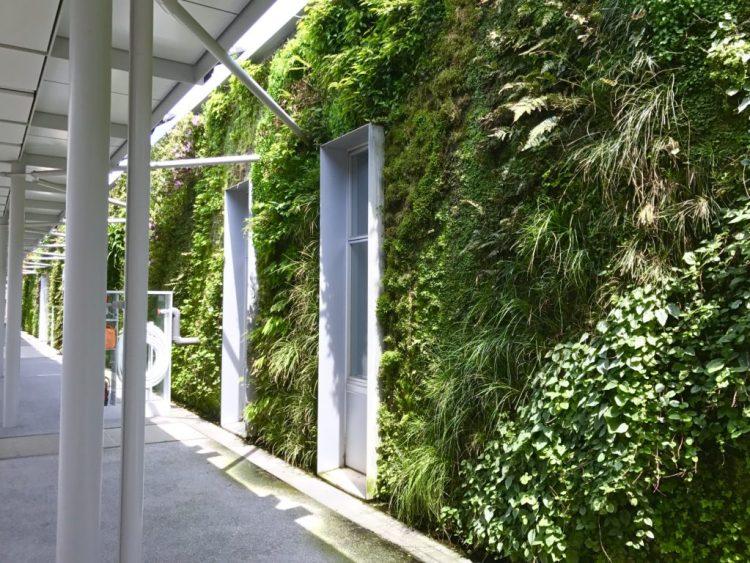 壁面緑化2