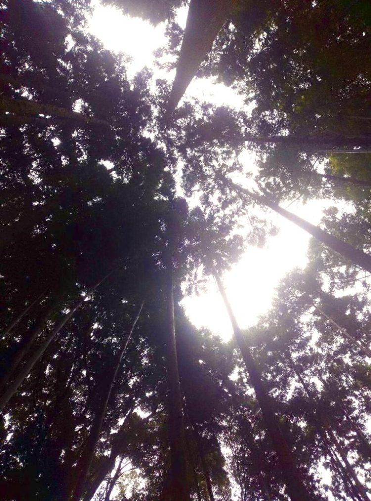 森の景色。