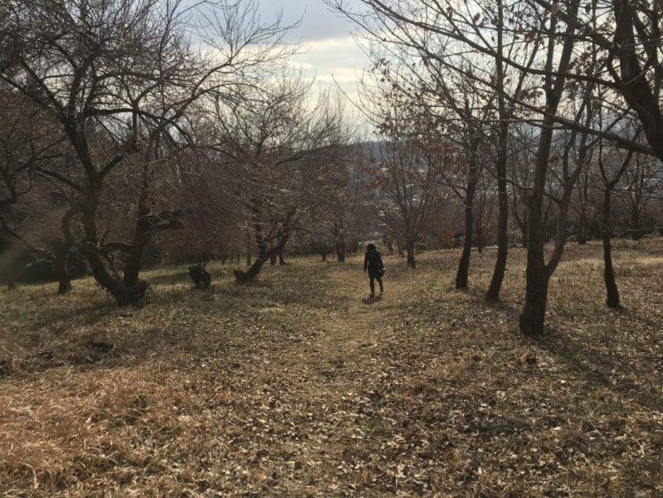 宇津木の森。