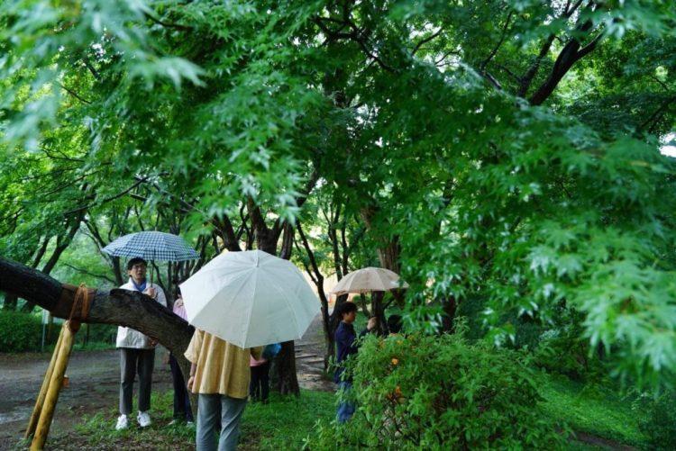 雨の時の木の仕組み。